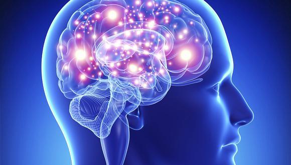 El cerebro es un órgano indispensable para nuestro completo desenvolvimiento.