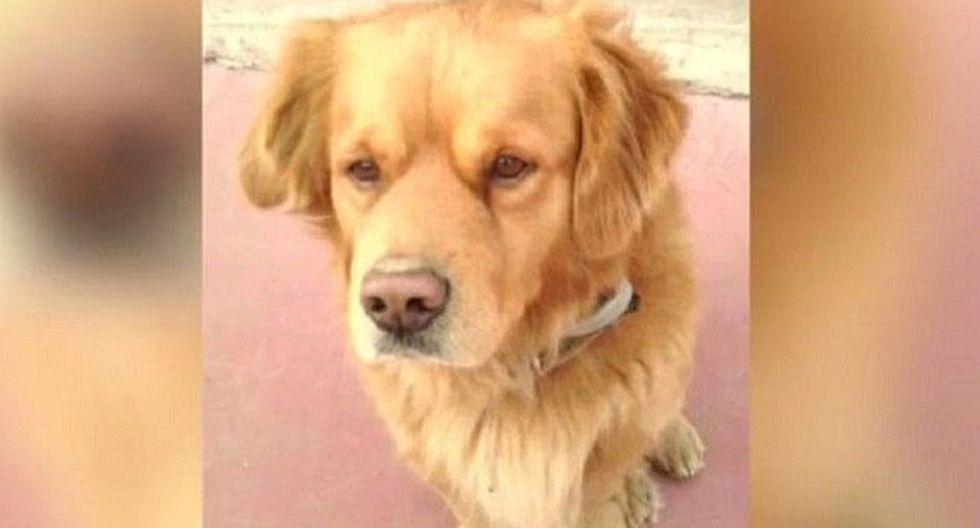 Perro desaparece en España y no creerás dónde apareció tres meses después