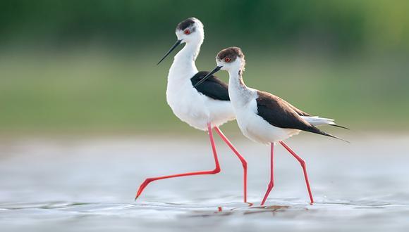 2 veces al año se celebra el Día Mundial de las Aves Migratorias: el segundo sábado de mayo y de octubre.