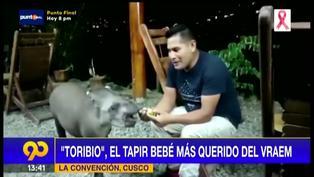 """""""Toribio"""", el tapir bebé que fue rescatado por una familia y hoy es tratado como una mascota"""