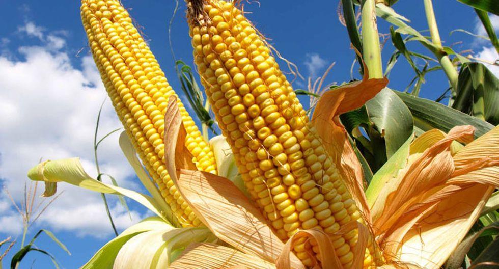 Agricultores preocupados por alza de semillas