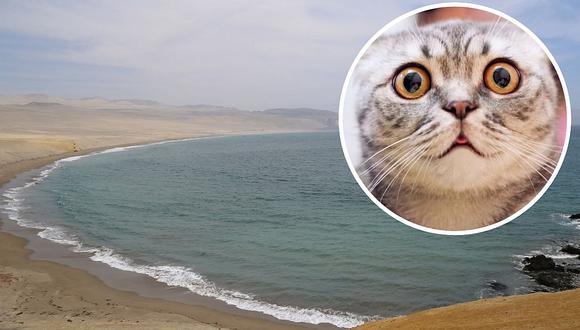 Paracas: Hombre arrojó un gato al mar y policía lo detiene por maltrato animal