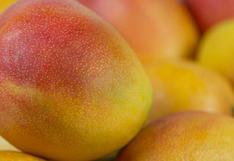 ComexPerú: Mango se acerca a un nuevo récord en exportación de US$ 260 millones este año