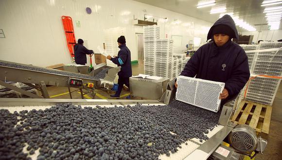 Perú puede desarrollar nuevos productos derivados de los arándanos para aprovechar la demanda mundial, indicó ADEX. (Foto: GEC)