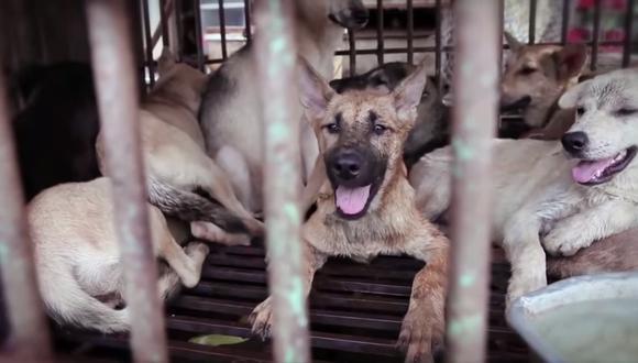 Vietnam: Famosos se unen contra consumo de carne de perro (VIDEO)