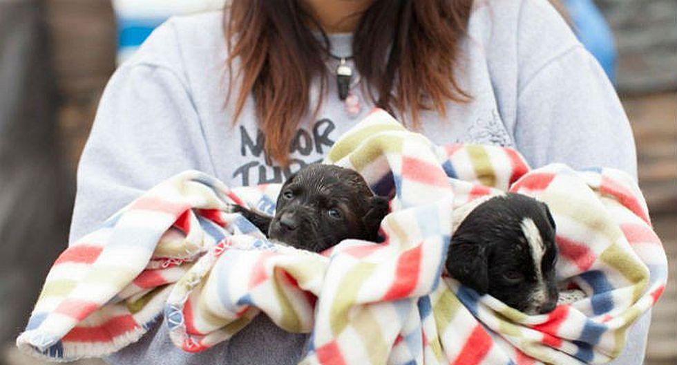 Crean brigada de emergencia animal por desastres naturales