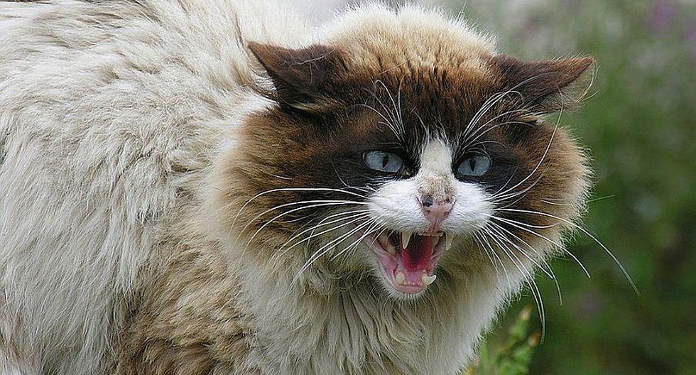 Australia pretende eliminar millones de gatos salvajes con salchichas envenenadas
