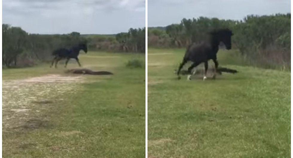 YouTube: Mira la increíble pelea entre un caballo salvaje y un cocodrilo [VIDEO]