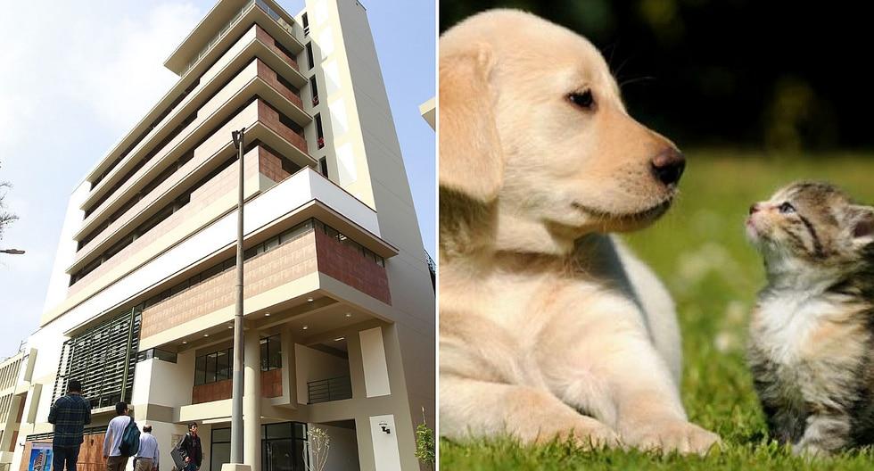 Tribunal Constitucional establece que es inconstitucional prohibir el uso de ascensor con mascotas