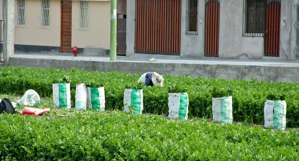 Bolivia suspende importación de hortalizas peruanas por temor a plagas