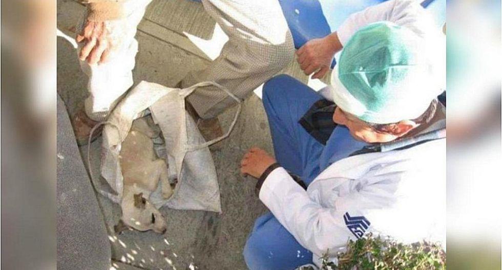 Abuelo se emociona hasta las lágrimas al saber que atenderán a su perro enfermo gratis