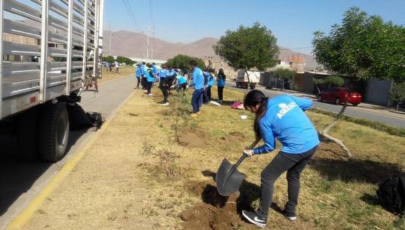Universitarios plantan 300 arboles en Socabaya