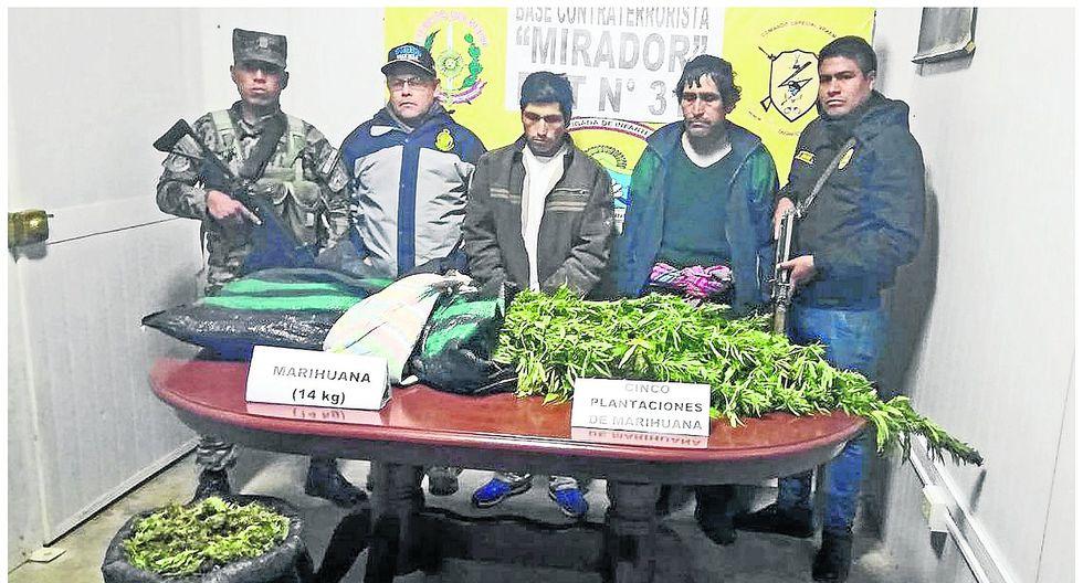 Padre e hijo siembran 2 mil 400 plantas de marihuana ocultos en medio del maizal