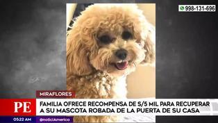 Familia ofrece 5 mil soles de recompensa por su mascota robada en Miraflores (VIDEO)