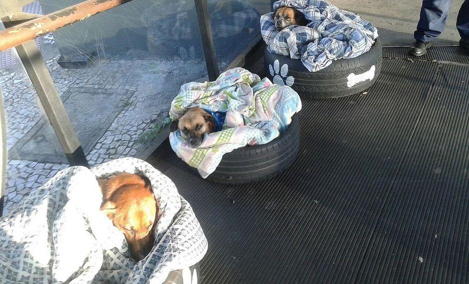 Brasil: Idean creativos refugios para cobijar perros callejeros
