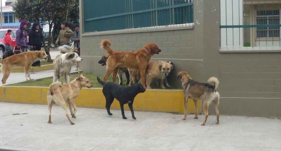 Alerta en Pasco por sobrepoblación de canes