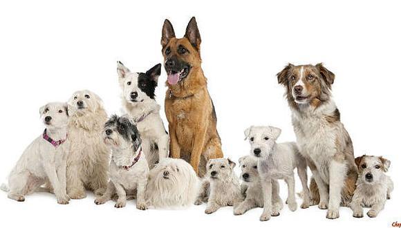 Conoce los beneficios para tu mascotas que puedes obtener en cualquier veterinaria