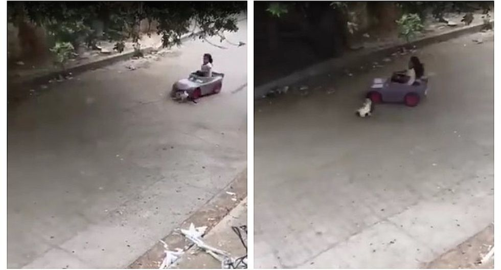 Niña atropella con su carro de juguete a un gato y se vuelve viral (VIDEO)
