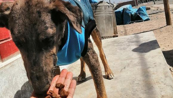 """Inició campaña """"Croquetón"""" para reunir alimento para 29 canes"""