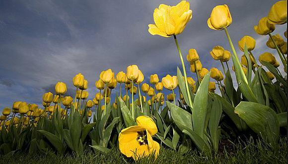 Primer censo mundial de plantas revela que una quinta parte están en peligro