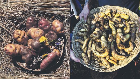 """""""Nuestras papas nativas, que se cultivan sobre todo en las alturas, son un alimento rico en nutrientes,  que debemos lograr que más gente consuma"""", sostiene Jimena Agois, fotógrafa y periodista gastronómica."""