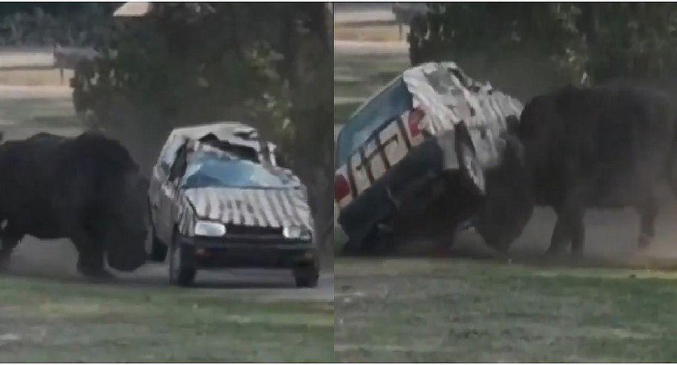Rinoceronte ataca y destroza camioneta de su cuidadora en zoológico (VIDEOS)