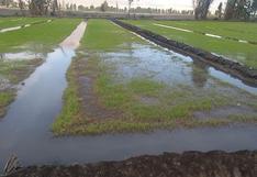 Dinero destinado para comprar fertilizante para el arroz sería insuficiente para Arequipa