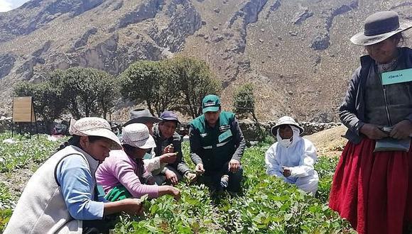 Forman a agricultores para reemplazar plaguicidas por insectos