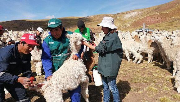 Protegen 90 mil cabezas de ganado serán protegidas ante heladas