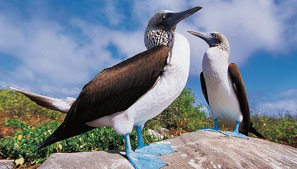 La variedad del ecosistema se logra gracias a la temperatura del mar y la abundancia de alimento.