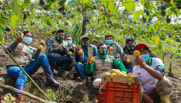 El boom de la fruta en agricultores huanuqueños/foto: Diario Correo