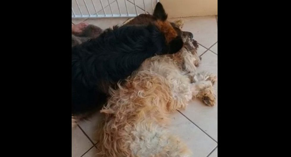 Perro (Foto: Captura video)