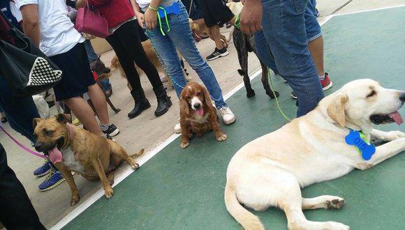 YouTube: Inician campaña de vacunación canina (Vídeo)
