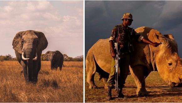 Kenia castigará con pena de muerte la caza ilegal de animales en peligro de extinción