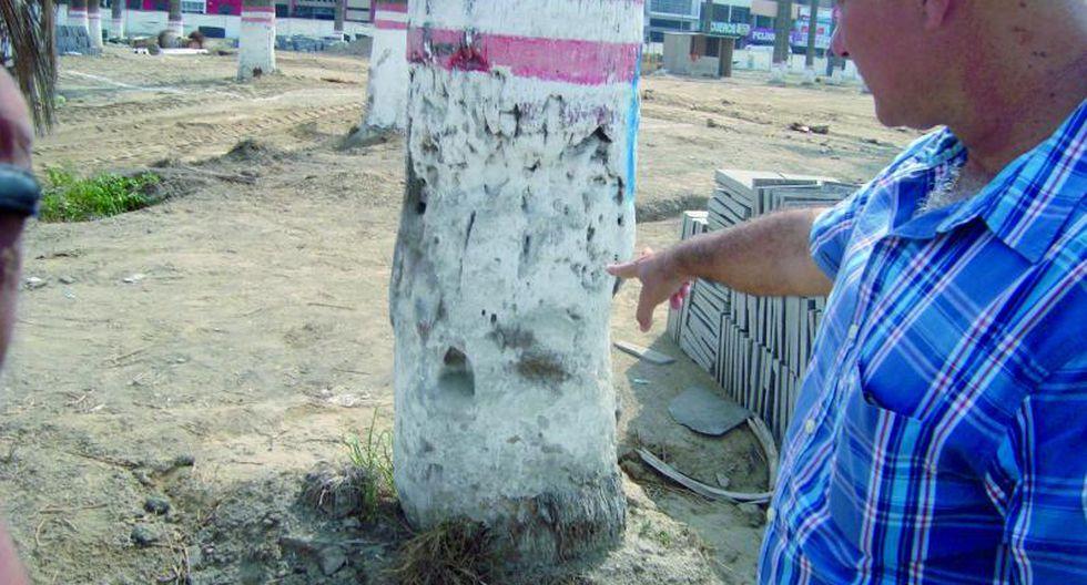 Nuevas palmeras en la Plaza Mayor de Chincha