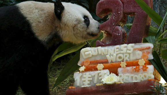 Jia Jia, la panda en cautiverio más vieja cumple 37 años