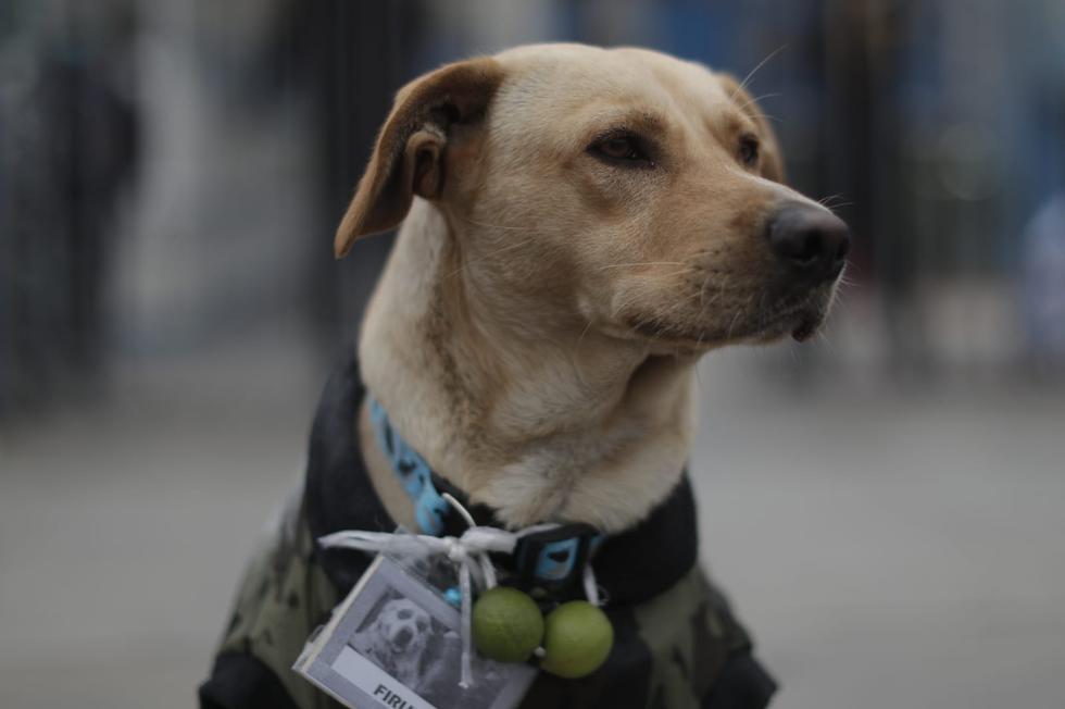 Un perrito esperando a su dueño en la puerta del hospital Almenara. Foto: Renzo Salazar