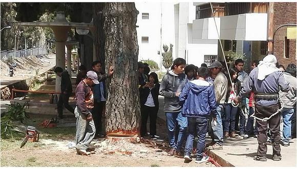 Facebook: Denuncian tala de árboles en Universidad Nacional del Centro del Perú (VIDEO)