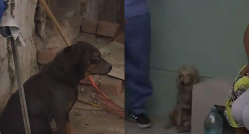 Piden ayuda a veterinarias para perros encontrados tras la explosión en Villa el Salvador