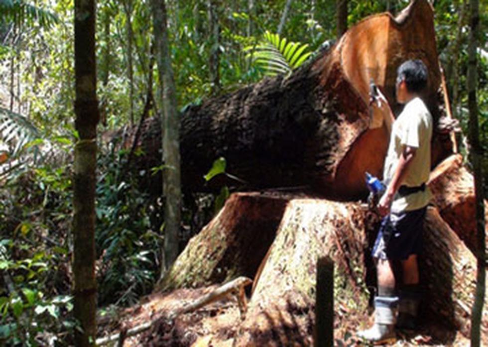 Recuperan más de 15 mil pies tablares de madera talada en reserva natural