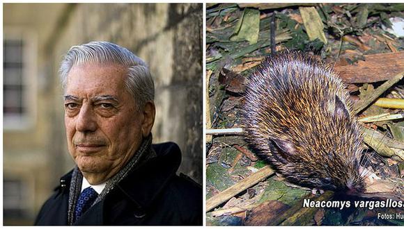 San Marcos descubre un nuevo mamífero y lo bautiza en honor a Mario Vargas Llosa