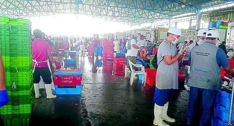 Precios de varias especies bajan en el terminal pesquero