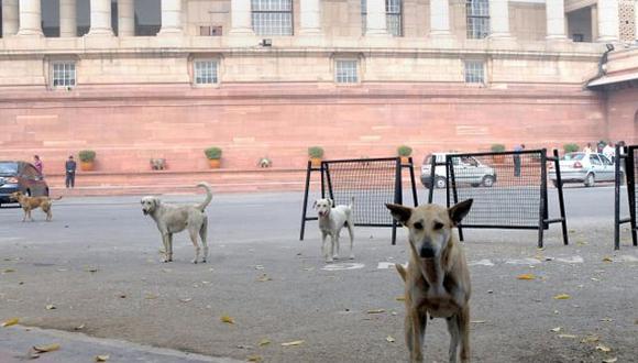 India: Perros callejeros son entrenados por la policía para cuidar casas