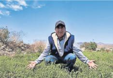 Agricultores apuestan por orégano orgánico