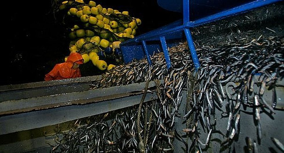 SNI: Pesca para consumo humano requiere acuerdo