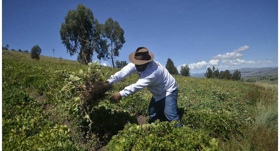 Más de medio millón de pequeños agricultores tendrán más dinero en el bolsillo