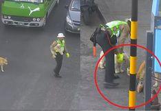 Policía ayuda a cruzar la pista a perritos callejeros y los alimenta (VIDEO)