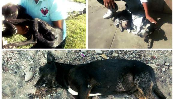 Animalistas denuncian matanza de canes en Moquegua