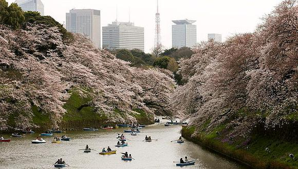 El afloramiento rosa fue más notorio en Kioto, donde tradicionalmente se practica el Hanami (la observación de los brotes rosas).  La primavera se adelantó en Japón, una primavera inusualmente cálida para el país. (Fotos: Difusión)