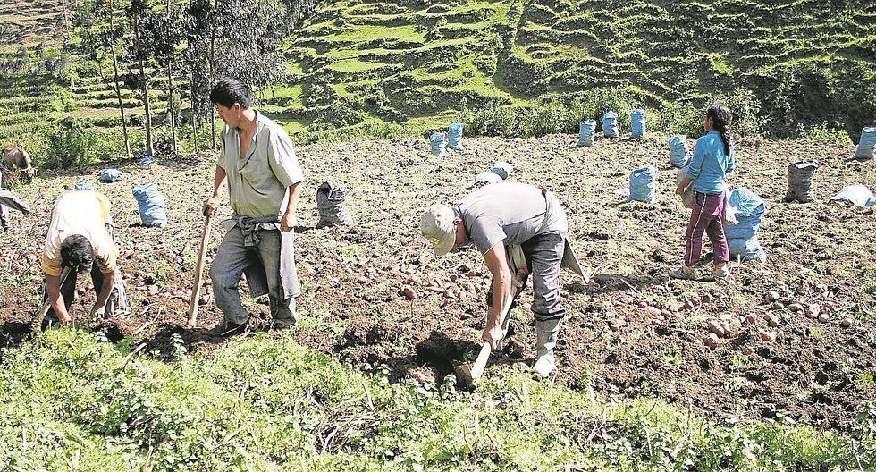 APEC: Las zonas rurales tienen un gran potencial